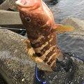 T.Sさんの新潟県西蒲原郡での釣果写真