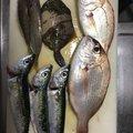 金魚さんの大分県での釣果写真