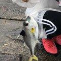 よっきーさんの愛知県での釣果写真