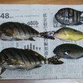 はとぽっぽさんの和歌山県東牟婁郡での釣果写真