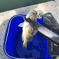 mituさんの秋田県にかほ市での釣果写真