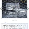 うっちーうっどぺっかあさんの埼玉県での釣果写真