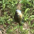茶々丸さんの千葉県習志野市での釣果写真