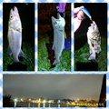 Jさんの青森県八戸市での釣果写真