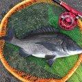 こまさんの愛知県での釣果写真