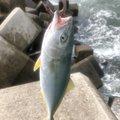 コイズミさんの福島県での釣果写真