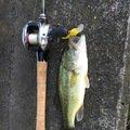 ひでちんさんの埼玉県草加市での釣果写真