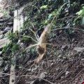 犬男さんの宮城県での釣果写真