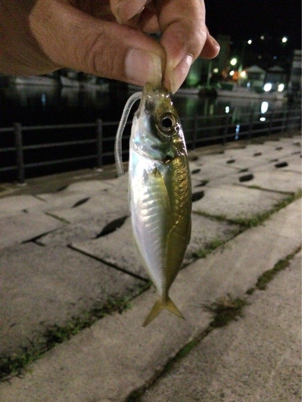 さいとうさんの投稿画像,写っている魚はアジ