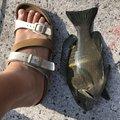 あきらさんの沖縄県浦添市での釣果写真