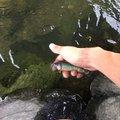 橘鏡華@チーム☆へっぽこさんの埼玉県比企郡での釣果写真