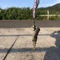 ブルーさんの広島県福山市での釣果写真