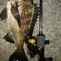 穴吹あきひろさんの香川県での釣果写真