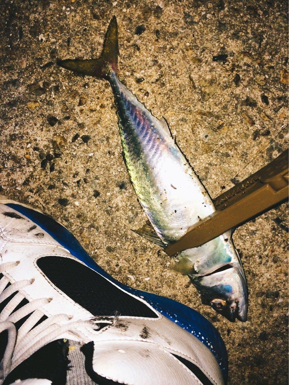 Light®️iggerさんの投稿画像,写っている魚は