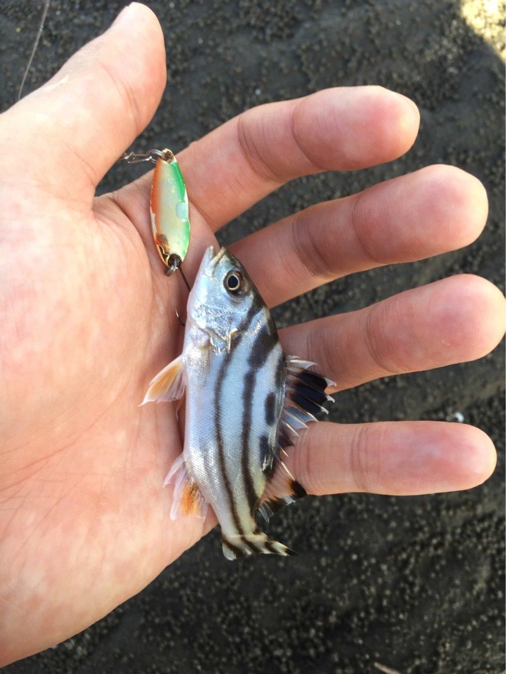 小物ハンターさんの投稿画像,写っている魚はコトヒキ