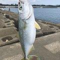 務さんの徳島県での釣果写真