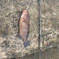 masasiさんの鹿児島県垂水市での釣果写真