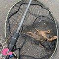 やきそばさんの千葉県での釣果写真