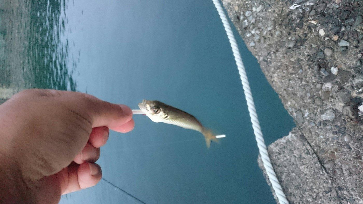 けいいちさんの投稿画像,写っている魚はアジ