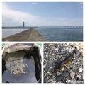しんいち。さんの大阪府泉佐野市での釣果写真