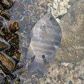 まひとさんの鹿児島県奄美市での釣果写真