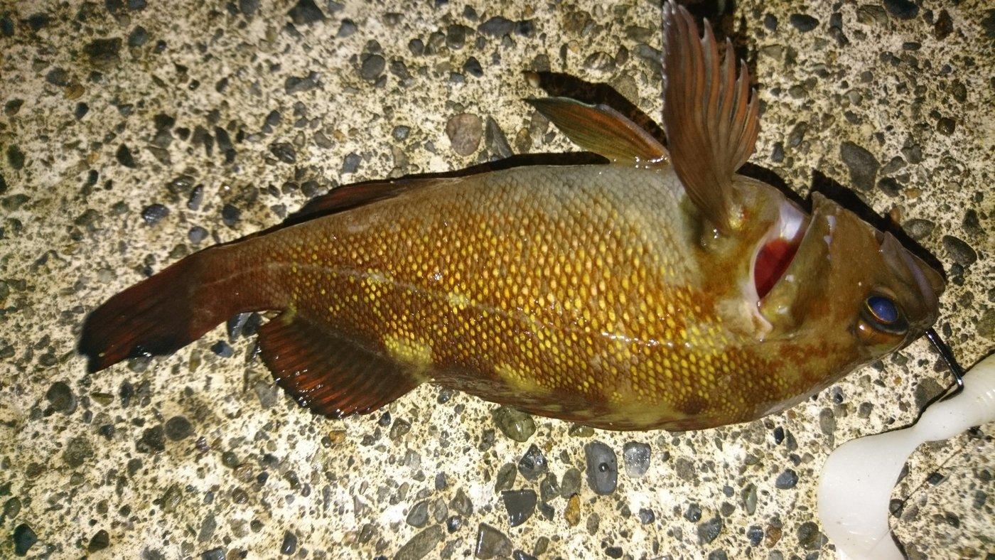 カチュアさんの投稿画像,写っている魚は