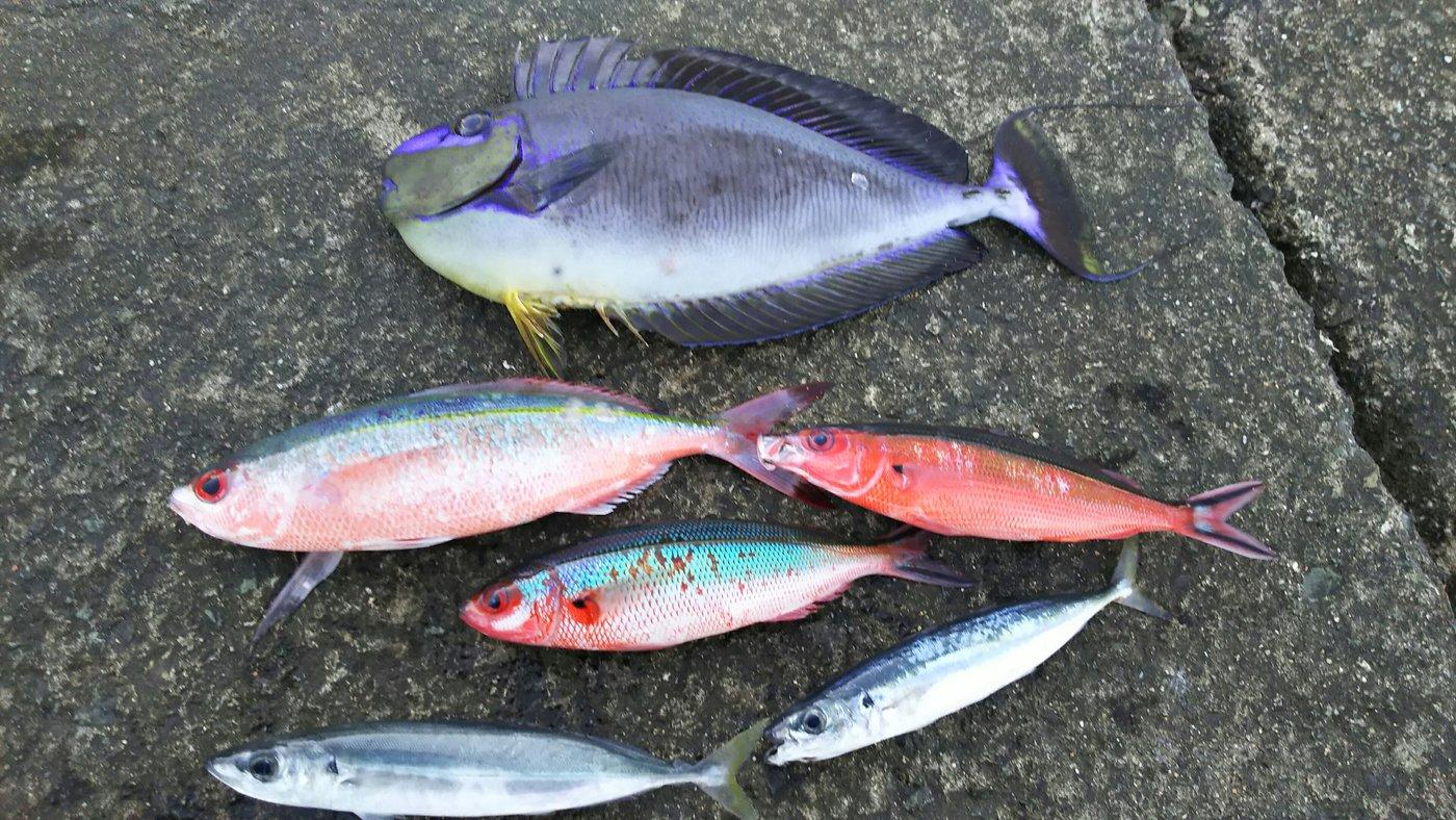 リュウマさんの投稿画像,写っている魚は