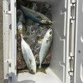 Kenta Asanoさんの三重県四日市市での釣果写真