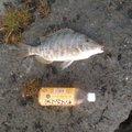 Tsu-83さんの沖縄県豊見城市での釣果写真