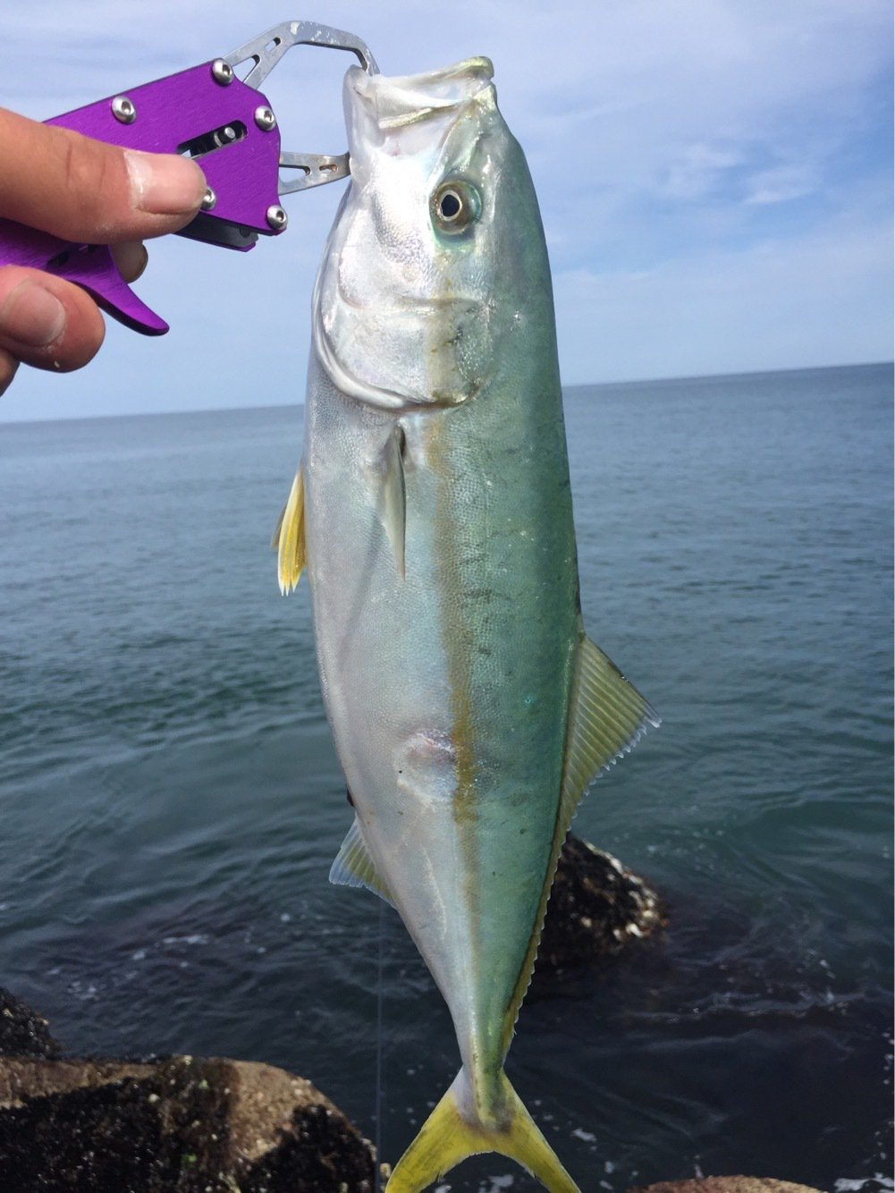 れんさんの投稿画像,写っている魚は