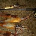 つっかさんのスルメイカの釣果写真