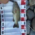 すらおさんの新潟県小千谷市での釣果写真