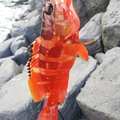 BONさんの静岡県での釣果写真