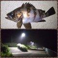 Tomo_Pandaさんの宮城県亘理郡での釣果写真