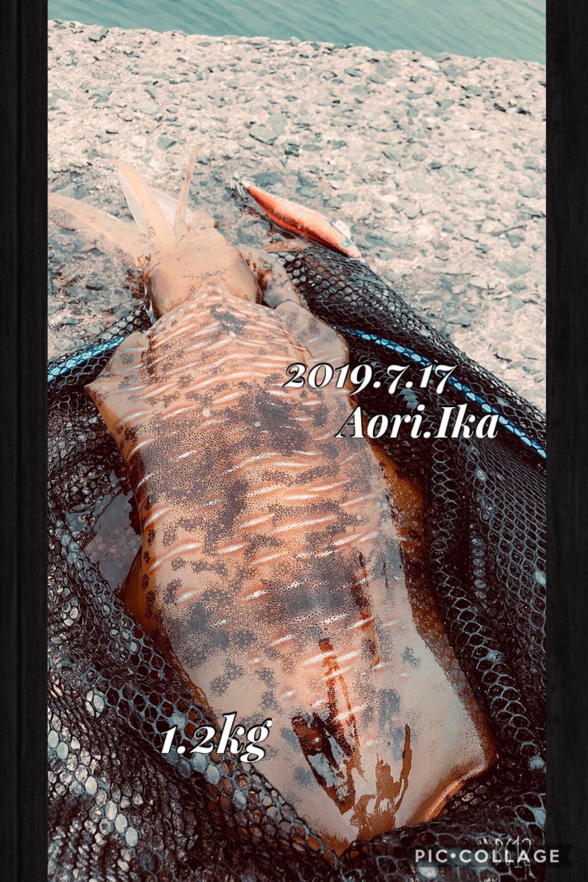 kaito@さんの投稿画像,写っている魚はアオリイカ