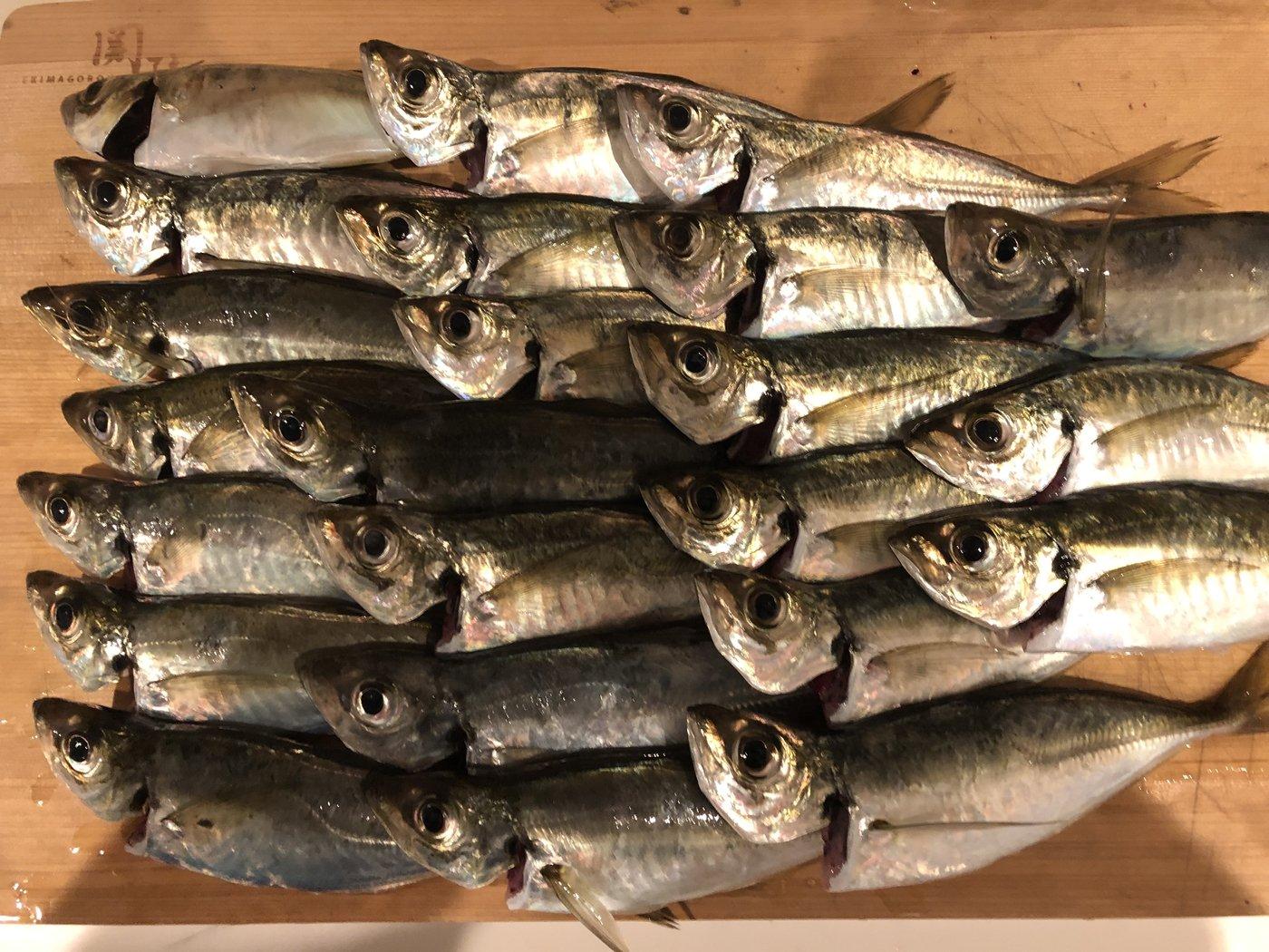 ヨシハラさんの投稿画像,写っている魚はアジ