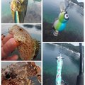 KRO さんのシイラの釣果写真