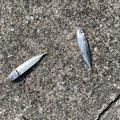 ホスッピイさんの兵庫県神戸市での釣果写真