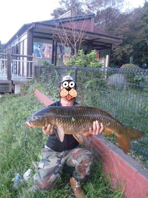 よっちゃんですさんの投稿画像,写っている魚はコイ