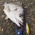 こーきさんの長崎県西彼杵郡での釣果写真