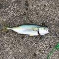 むーさんの石川県かほく市での釣果写真