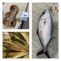 Gグレさんの茨城県ひたちなか市での釣果写真