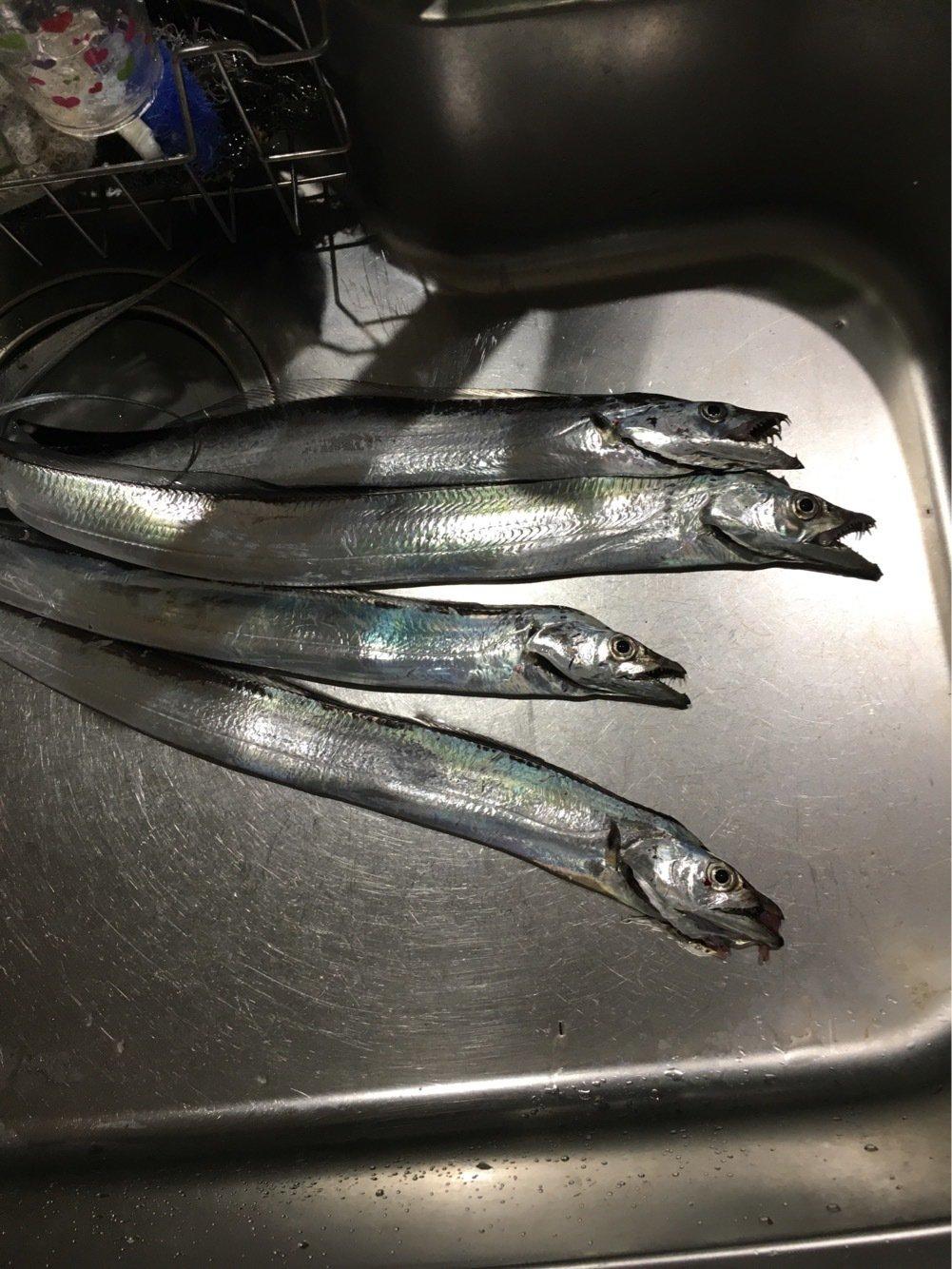 朋希さんの投稿画像,写っている魚はタチウオ
