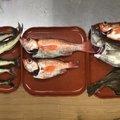 ずいちゃまさんの青森県西津軽郡での釣果写真