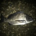 つりものがかり主任さんの青森県むつ市での釣果写真