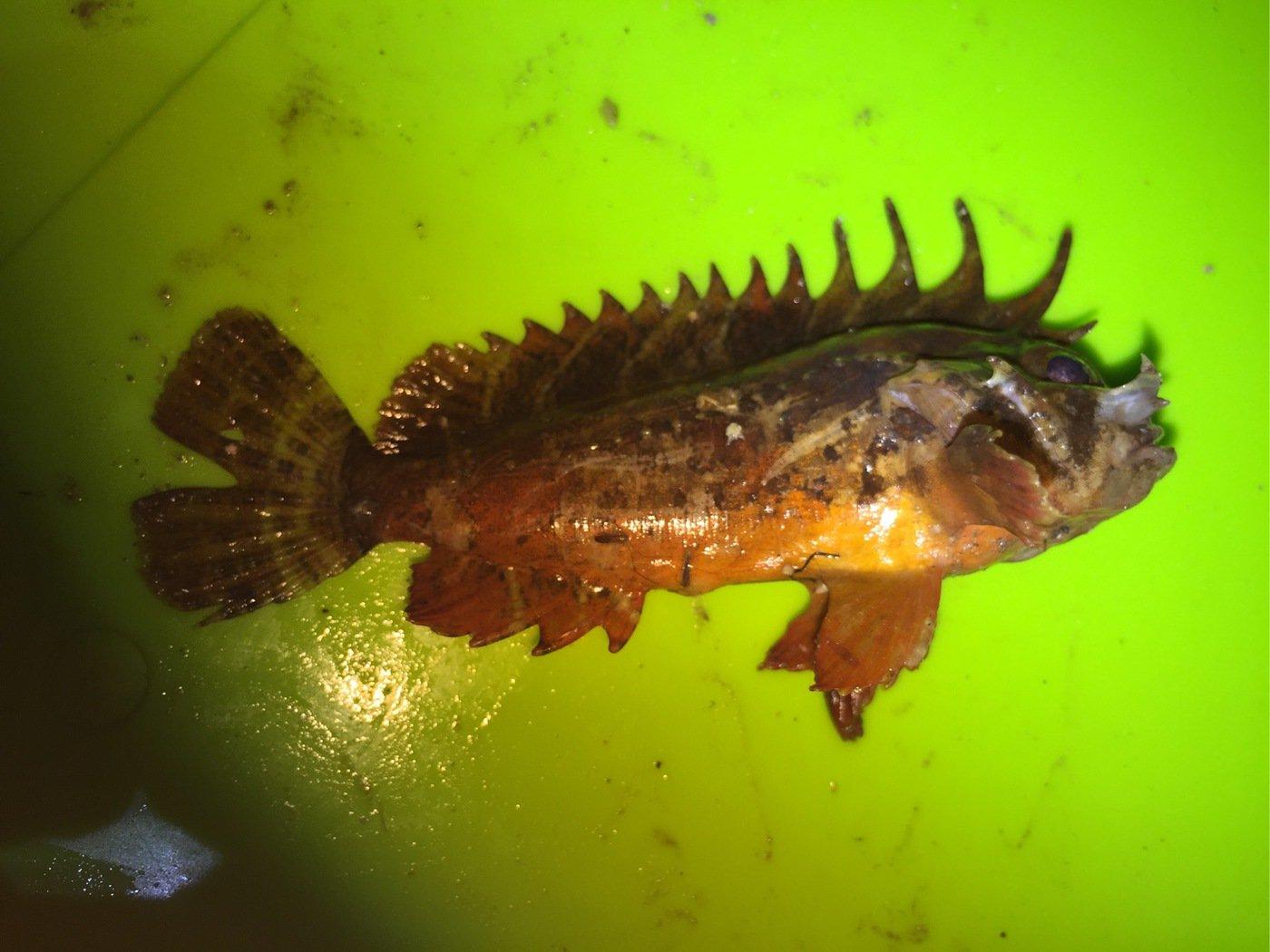 Redhorseさんの投稿画像,写っている魚は