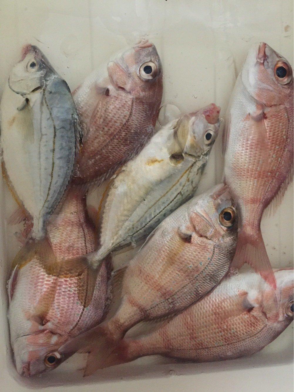 yumichanmanさんの投稿画像,写っている魚はマダイ