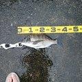 南の黒鯛師さんの鹿児島県垂水市での釣果写真