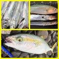 魚ーさんのタチウオの釣果写真