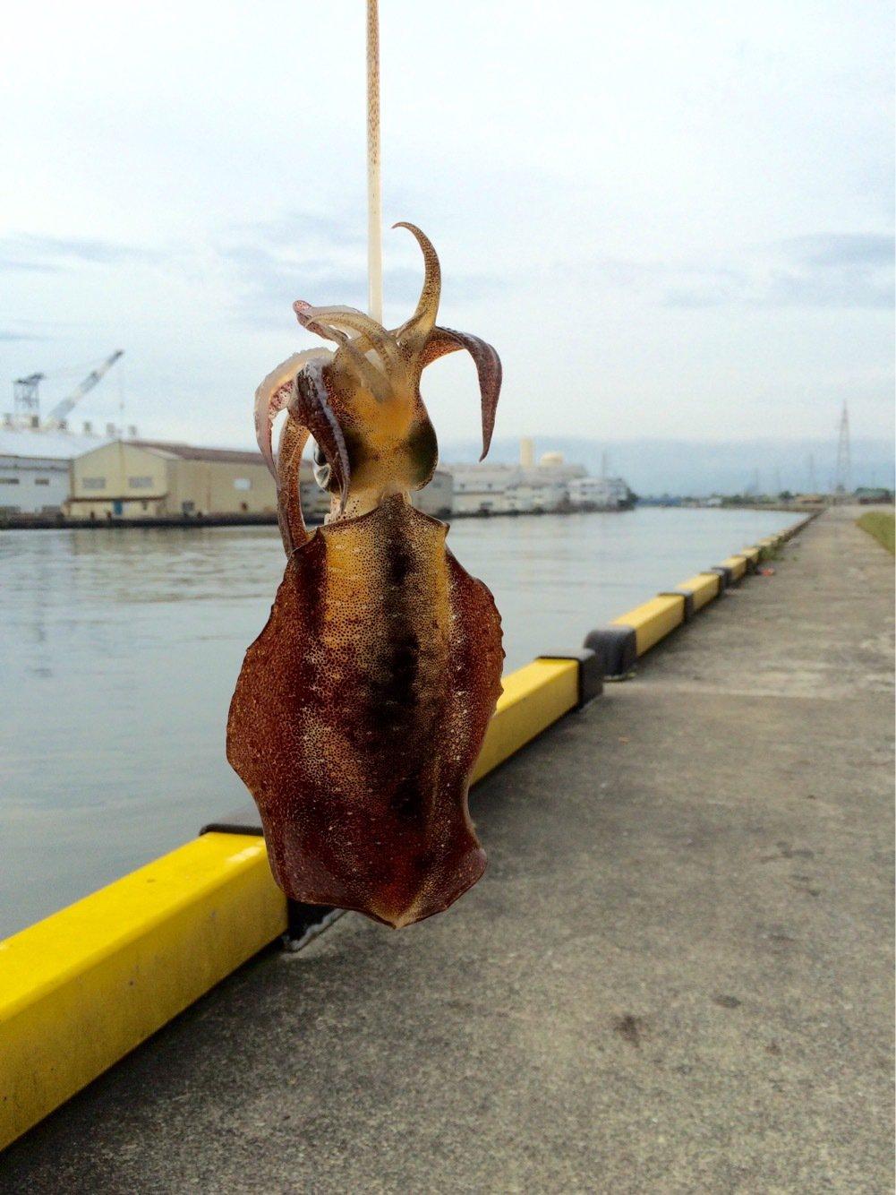 Alexさんの投稿画像,写っている魚はアオリイカ